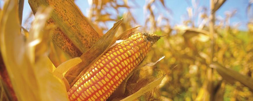 6 beneficios de las palomitas de maíz para tu salud